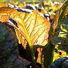 Mustard Greens by jessicacbarker