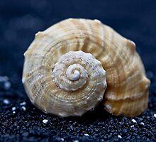 seashell by Joana Kruse
