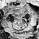 A Face On A Tree (Black & White) by tropicalsamuelv