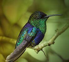 Hummingbird by jimmy hoffman