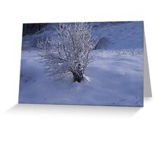 -GLACE IN PLACE  1 - ITALY EUROPA- VETRINA RB EXPLORE 30 DICEMBRE 2012 --- Greeting Card