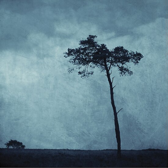Trees by Anne Staub