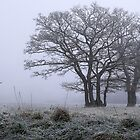 Ground Frost by Irina Chuckowree