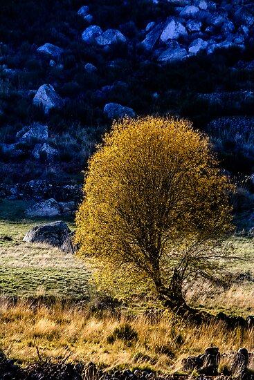 Shining in winter by Edgar Laureano