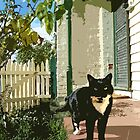 Verandah Cat by Julia Marshall