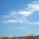 No Means No - Seagull - 14 12 12 by Robert Phillips