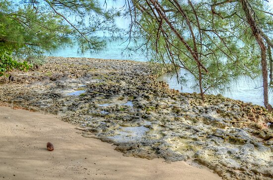 Lonely Coconut on the Beach in Nassau, The Bahamas by 242Digital