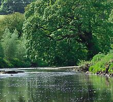 Fly Fishing on the River Wharfe by mps2000
