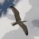 seagull by MichaelK