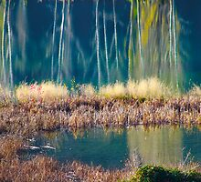 Autumn Reflection by Aimee Stewart