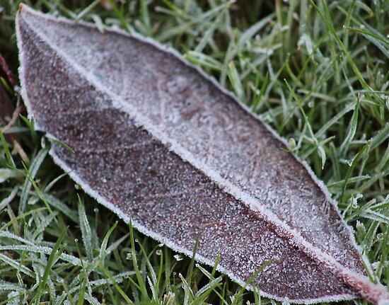 frosty leaf by Perggals© - Stacey Turner