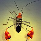 Squash bug by jimmy hoffman