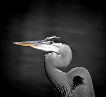 *Great Blue Heron* by DeeZ (D L Honeycutt)