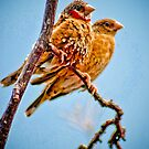 Two Finches  by Jeanie93