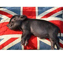 Micro pig sleeping on Union Jack cushion Photographic Print