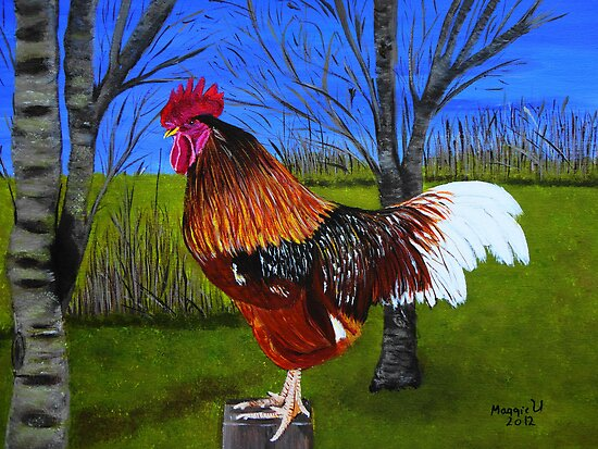 Rooster in the back yard by maggie326