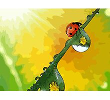 Beautiful ladybug Photographic Print