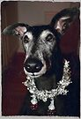 Galgo Gilbert wishes Happy Christmas! by homesick
