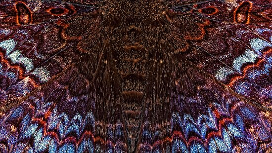 Butterfly wings by jimmy hoffman