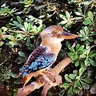Bird by LKPhoto