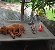 Paprika Exhausted with Assortment of Toys by scottigroberts