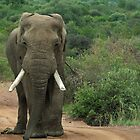 Pilanesberg Game reserve # by Mark Braham
