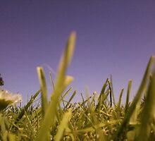 Grassy-land by Chlo1249