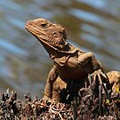 Eastern Water Dragon by JLOPhotography