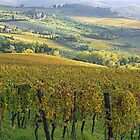 Fontodi's wineyards in Panzano - Toscana by gluca