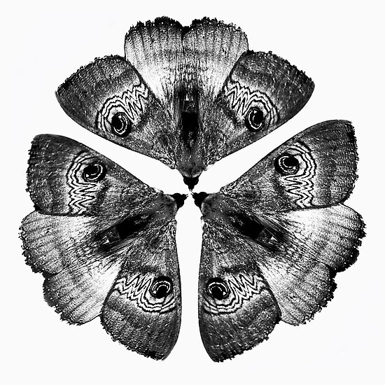 Patterns in Nature - Moths by Georgie Sharp