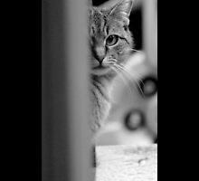 Tabby Cat by © Sophie W. Smith