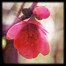 In Bloom by MidnightAkita