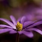 Purple flower by Graham McAndrew