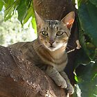 Mr Tuffy in the tree by Annabella