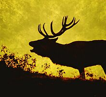 red buck 2 by Adam Asar