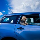 Dog by Car Window by Edmond Leung