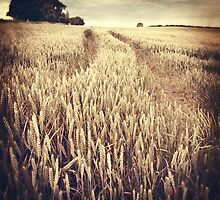 Wheat Field by Citizen