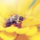 Bee on Yellow by Shannon Ferguson