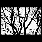 Branch Structure  by © Sophie W. Smith