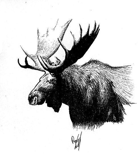 Moose  by RachaelSelk