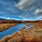 Washoe Wetlands 2 by Dianne Phelps