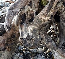 Driftwood On Our Shores --Monmouth Beach, Lyme ,Dorset UK by lynn carter