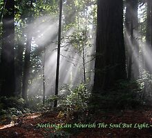 Nothing Can Nourish The Soul But Light.~ Rumi♥ by Caren della Cioppa