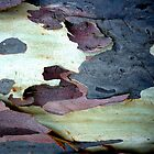 Bark Abstract # 10 by Frederick James Norman