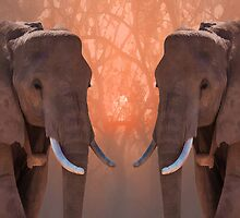 Serengeti Kings by Anthony  Poynton