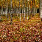 Fall Trees by Benkeys