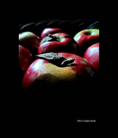 Malus Domestica - McIntosh Red Apples by © Sophie W. Smith