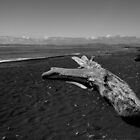 Drift Wood by srhayward
