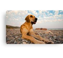 Playful Dog On The Beach Canvas Print