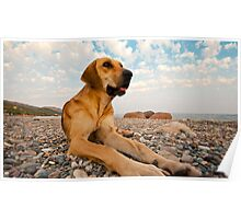 Playful Dog On The Beach Poster